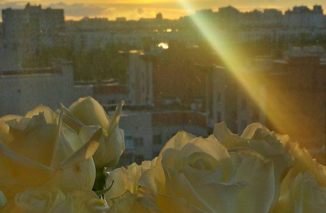 Закат. Розы на балконе