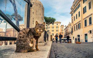 Рим, Area Sacra. Коты
