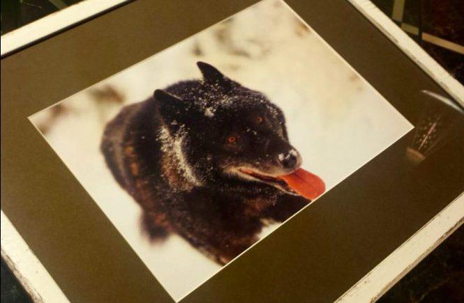 Рисовать каждый день фото волка   Блог без правок
