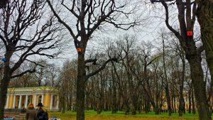 скворечники на деревьях у Михайловского сада