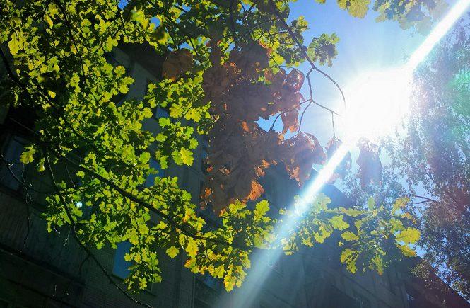 дубовая ветка и солнце