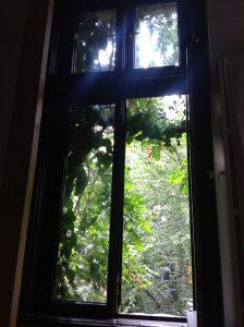 Заросшее окно