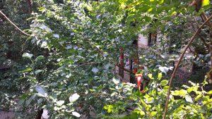 Зеленый двор хостела на улице О, Будапешт.