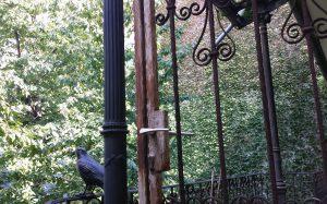зеленый двор и кованый ворон