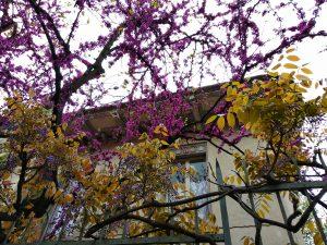 Турин - Милан | Блог без правок